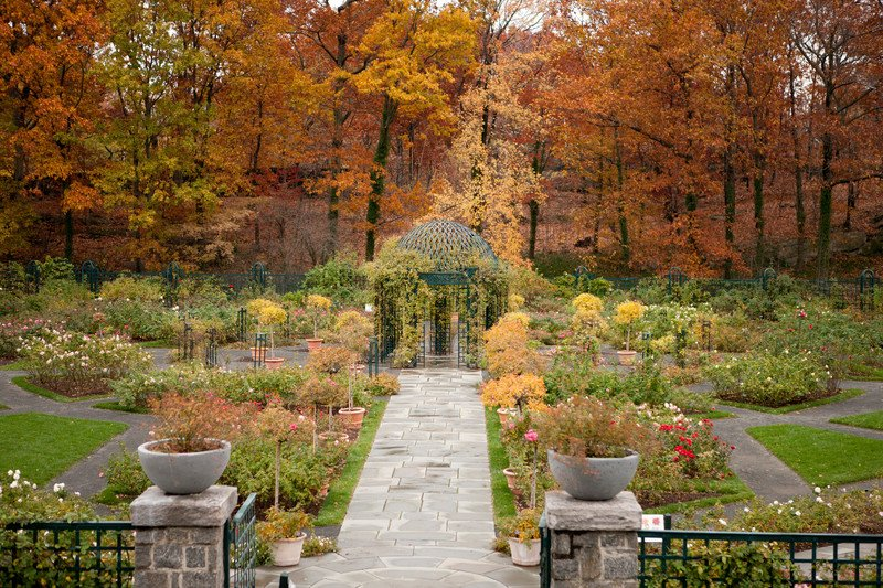 The family will love the NY Botanical Garden in the Bronx.  NYLovesFall