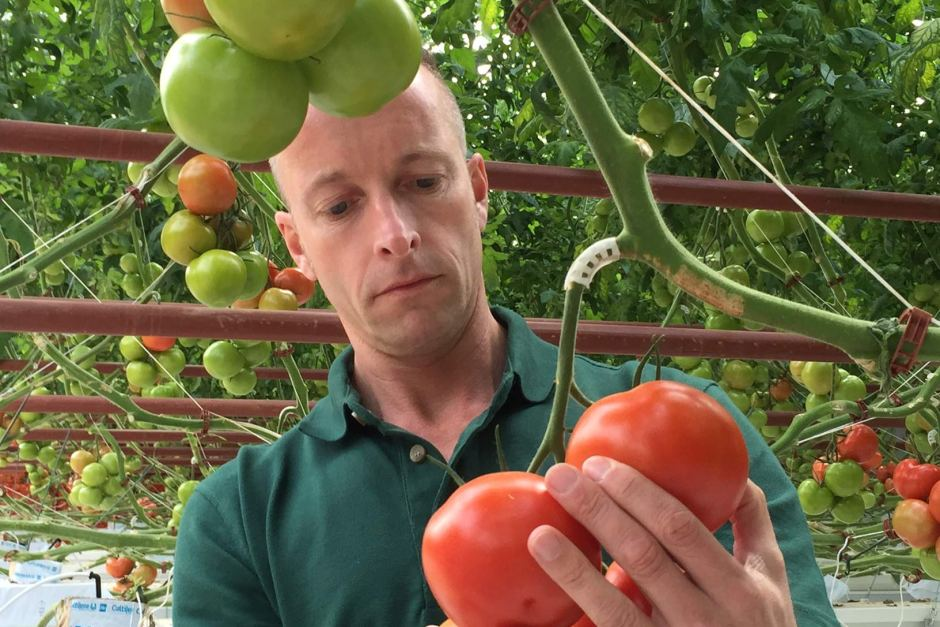 Sundrop Farms pioneering solar-powered greenhouse to grow food without fresh water #agchatoz https://t.co/DJLAae0Fgj https://t.co/6uoudy6IC5