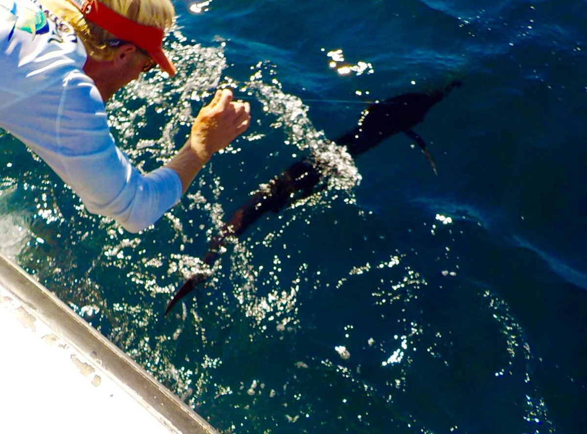 Orange Beach, AL - Intimidator released a Sailfish.