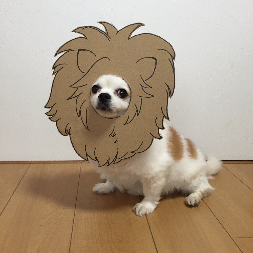 Having a rough day? Here's a Japanese dog wearing cardboard cutouts