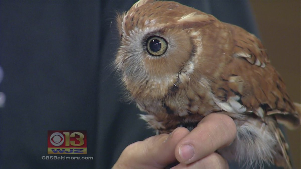 Oct. is an exciting month for the @marylandzoo. Just ask Pellet!