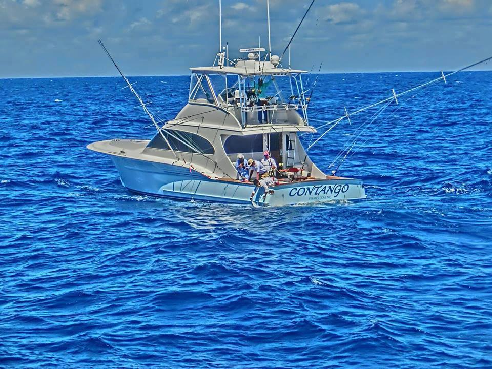Contango Sportfishing Charters (North Carolina) https://t.co/Qq6iq305VI