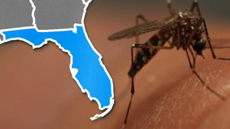 New batch of Zika-carrying mosquitoes found in Miami Beach 7News