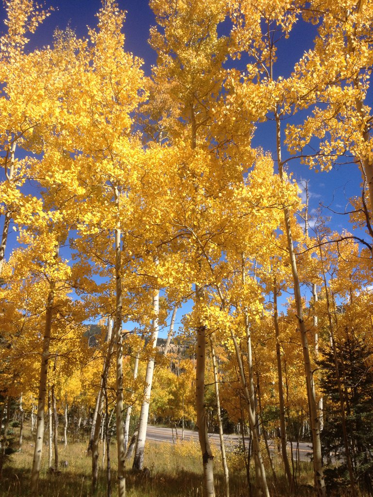 Fall foliage at Cuchara Pass. #colorado https://t.co/9LJTvjobvH