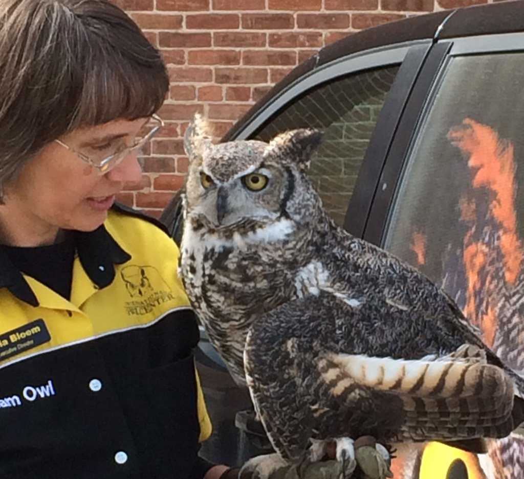 Iowa Bird Of Mouth On Twitter Happened Upon The International Owl Center On Houston Mn And Met Alice A Great Horned Owl On Her Way To Class