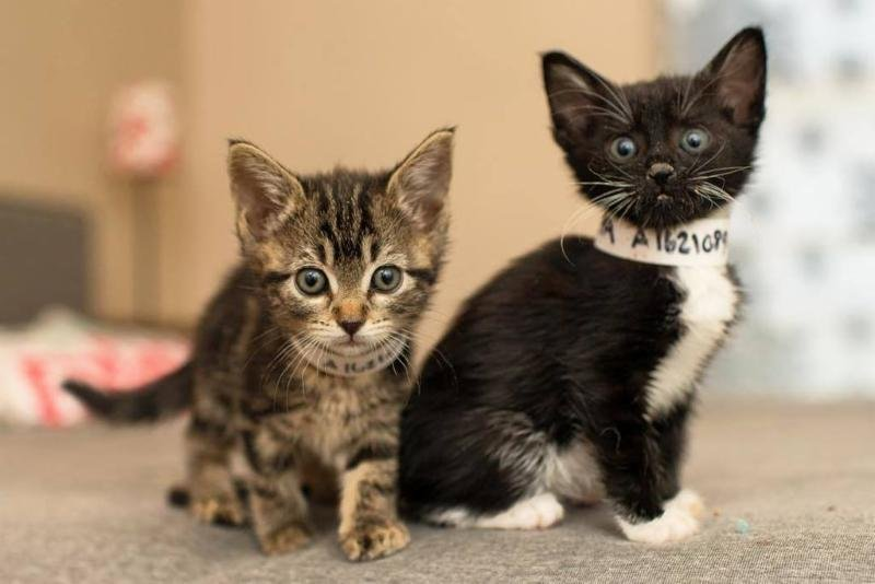 LA animal shelters say they're 'flooded with kittens' in need of foster homes