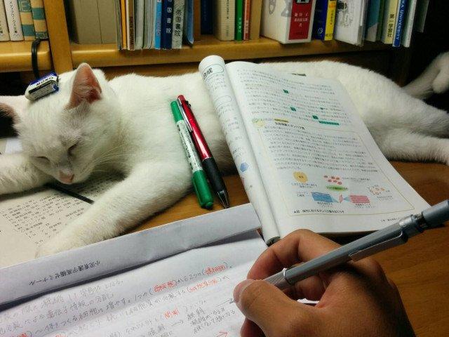勉強終わったら言ってね https://t.co/OsYD5dqXAR #cat #猫 #写真 #ざきおか https://t.co/hnrV9QbRco