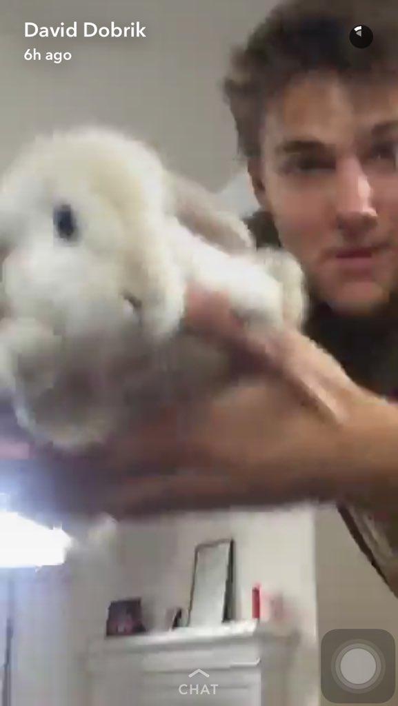 cool bunny baileythebunny twitter