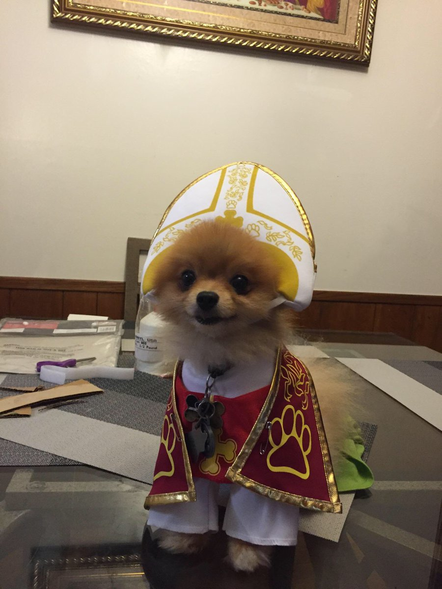 ? ? ??? ? ? on Twitter  My mom decided to buy a pope costume for the dog ???u2026   & ? ? ??? ? ? on Twitter: