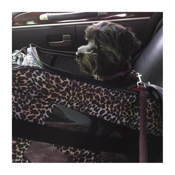 Dallas here we come!! #dallasfandays #RidingInStyle #doginleopardclothing https://t.co/wzRdIxLUY8