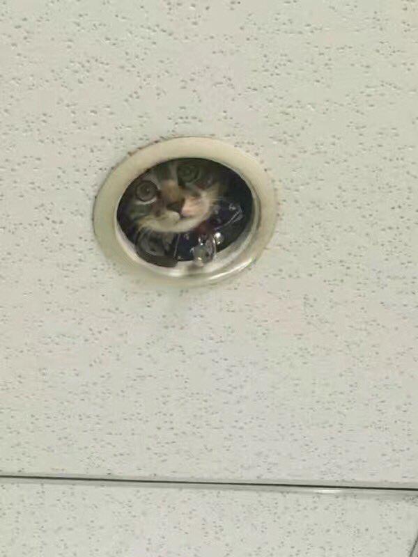 我が家にも欲しいwこの監視カメラが可愛すぎて笑うwww
