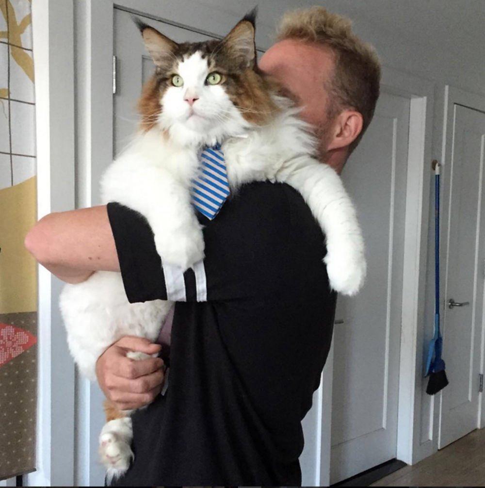 приправы брала самые крупные коты в мире фото джакометти самый высоко