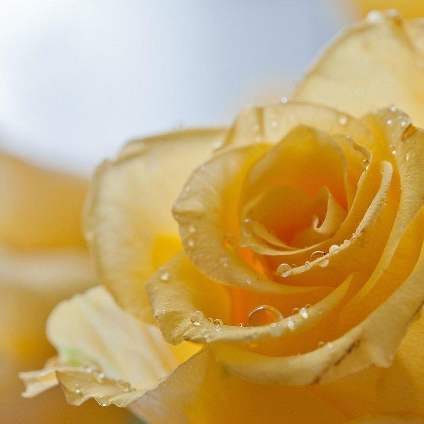 Te regalo una rosa - Página 14 Cu6M-3uWAAEre73