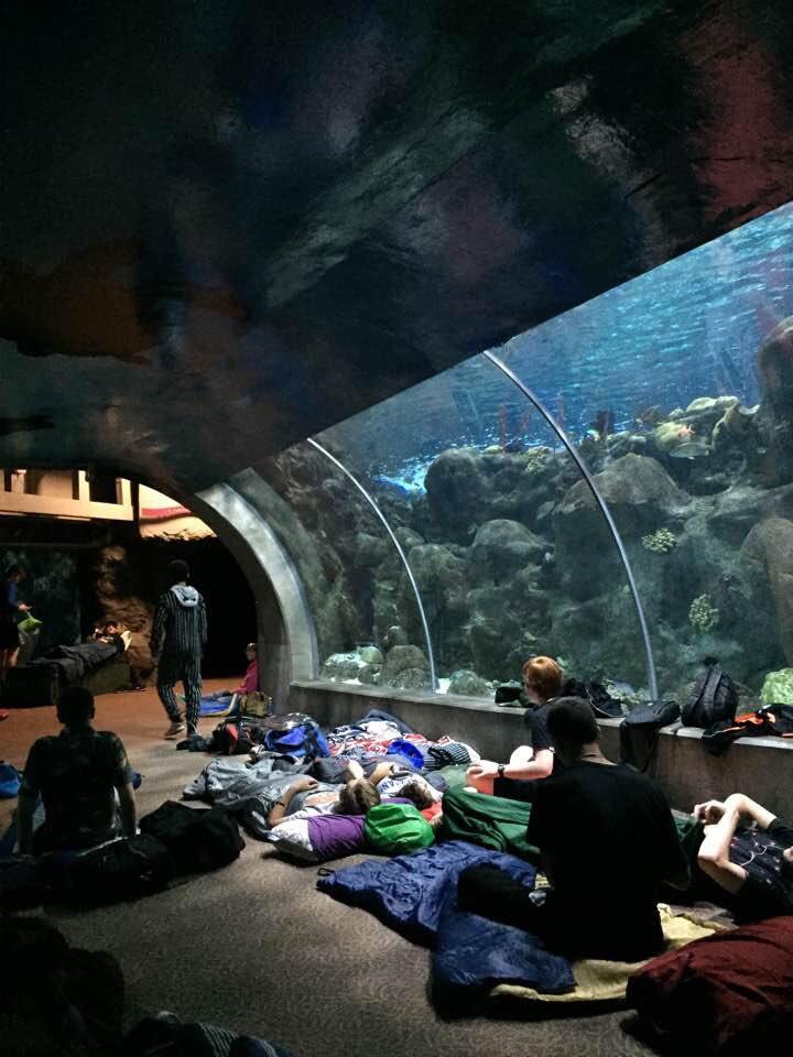 Suzi Lambert On Twitter Celebrating Tweet 400 With A Post From The Florida Aquarium Littlemermaid