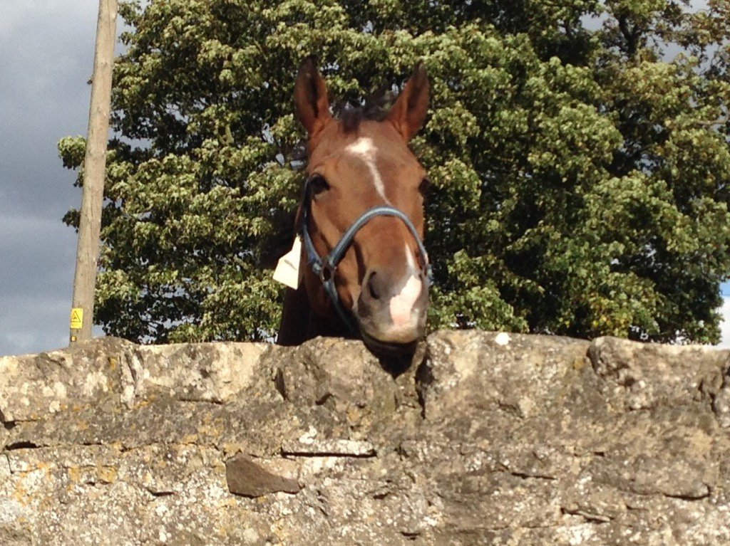 Barney McGrew enjoying retirement at the yard of Michael Dods. The 2010 Chipcase winner happy to watch life go by.