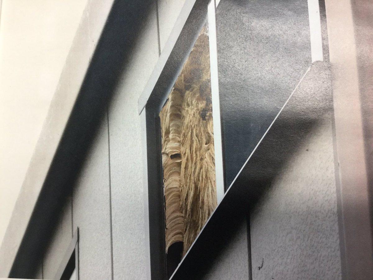 窓を覆うように作られたスズメバチの巣の写真を見たときの衝撃と言ったらもうね。 https://t.co/NBR2nPHQ7c