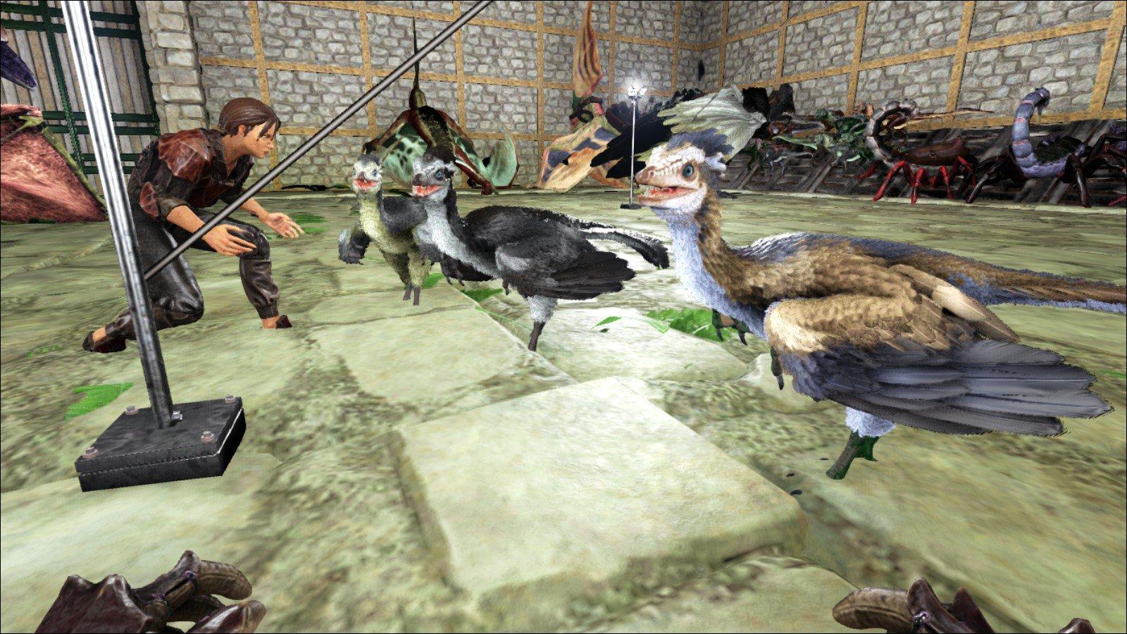 テイム 始祖鳥