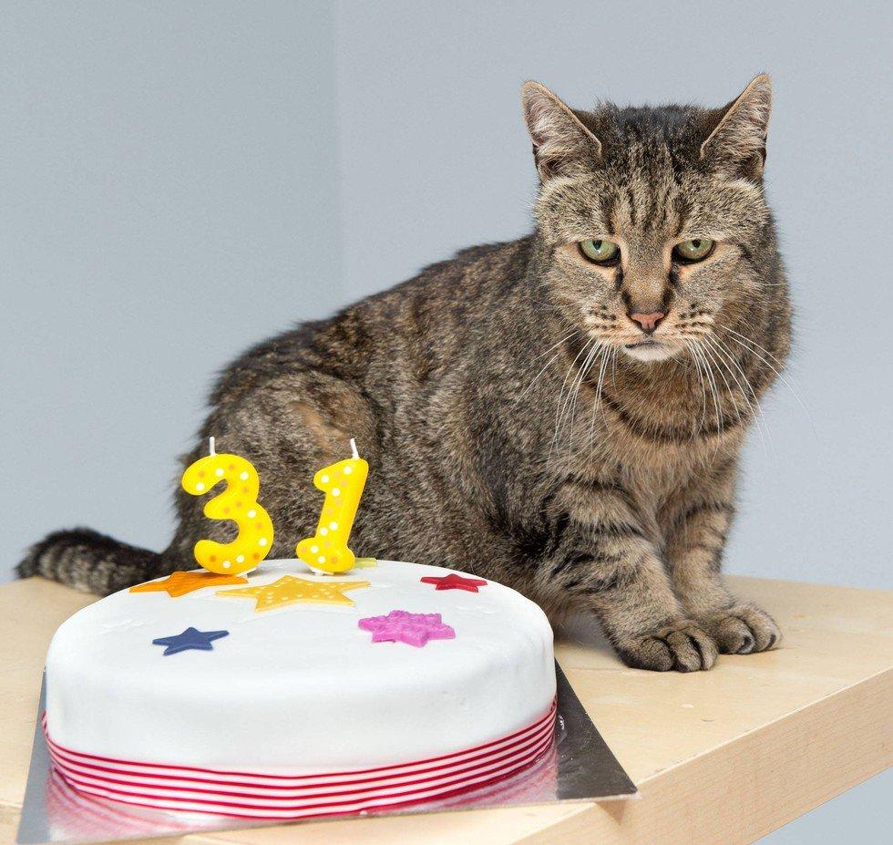 самый старый кот в мире реализуем изделия
