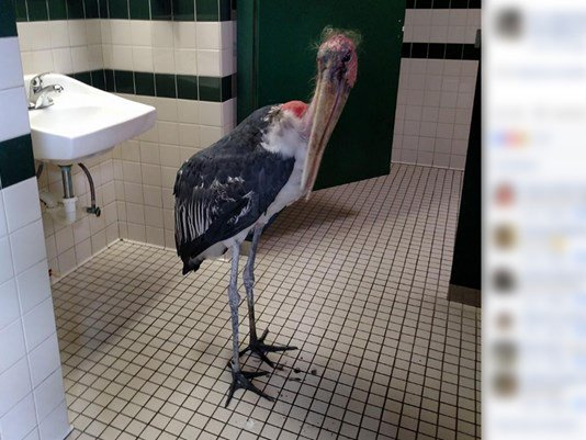 Stork hides from #HurricaneMatthew in St. Augustine, Fla. zoo bathroom https://t.co/Hezu3bzZyk
