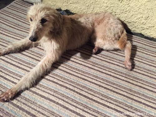 A male dog was found on 08/10/2016 in The Local Area, #Saggart https://t.co/HSt32AsChU #fpie https://t.co/d8tbpUGvGi