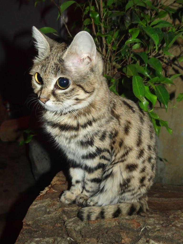 In the bush gato - 3 10