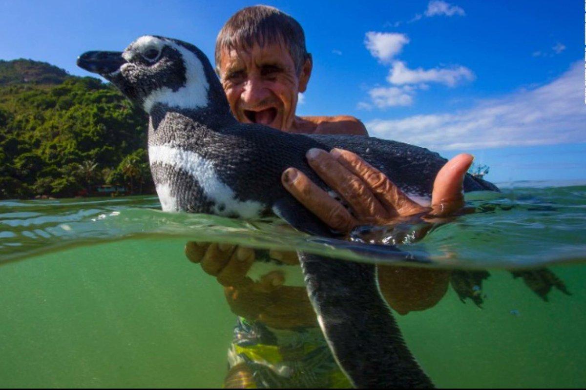 как содержать дома пингвина