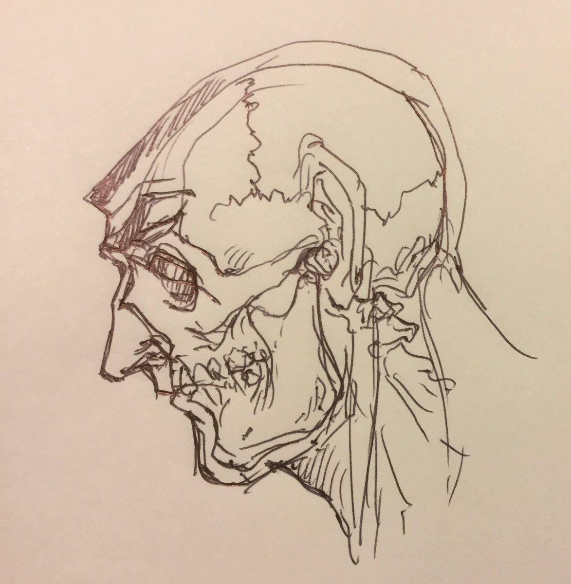 ゴルゴ13見るたびに頭蓋骨どうなってるんだろうと思っていて、多分目はダミーでほっぺたに入る細い線が実は目なんじゃないかと勝手に考えて頭蓋骨を当てはめてみた。 https://t.co/psnCgQDqnC