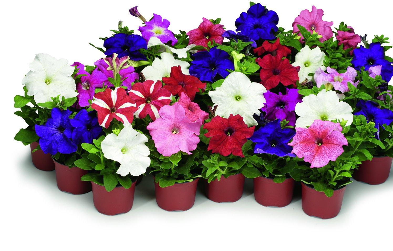 Заказ рассады цветов