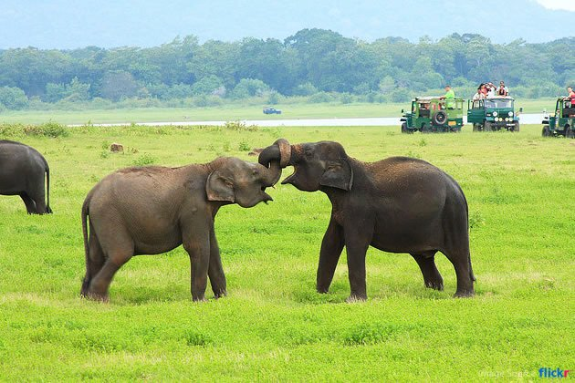 INDEPENDENCE TRAVEL & TOURS IN SRI LANKA