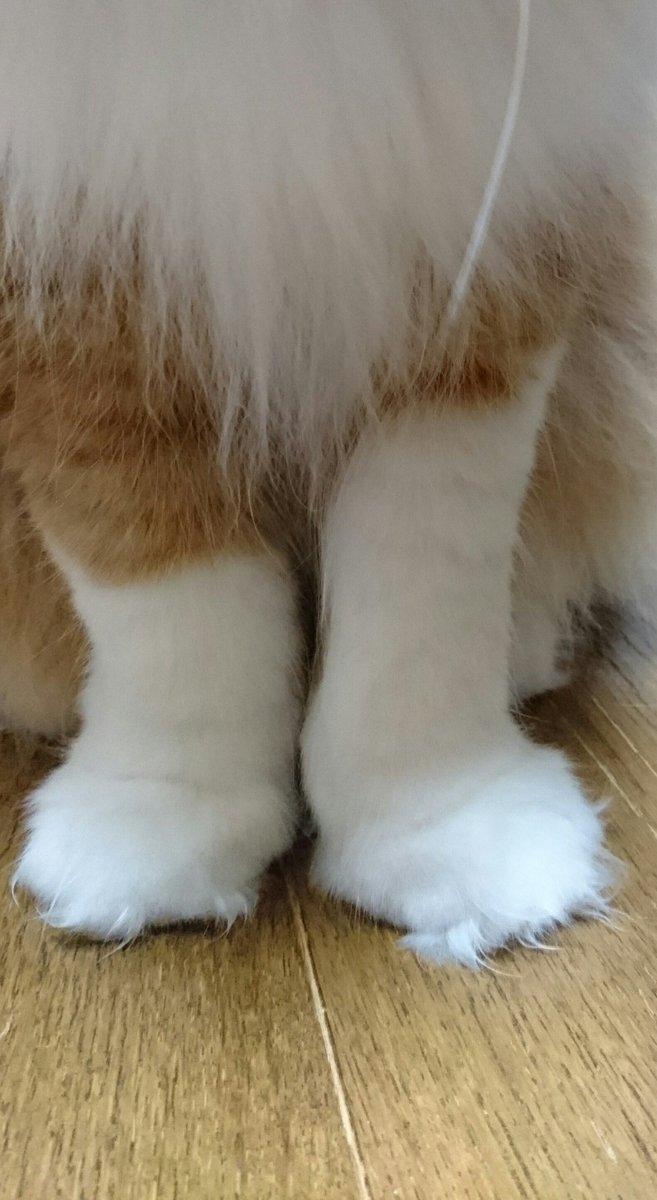 靴下の長さが違う。#伊藤家の天使 pic.twitter.com/sjuHABj3Eg
