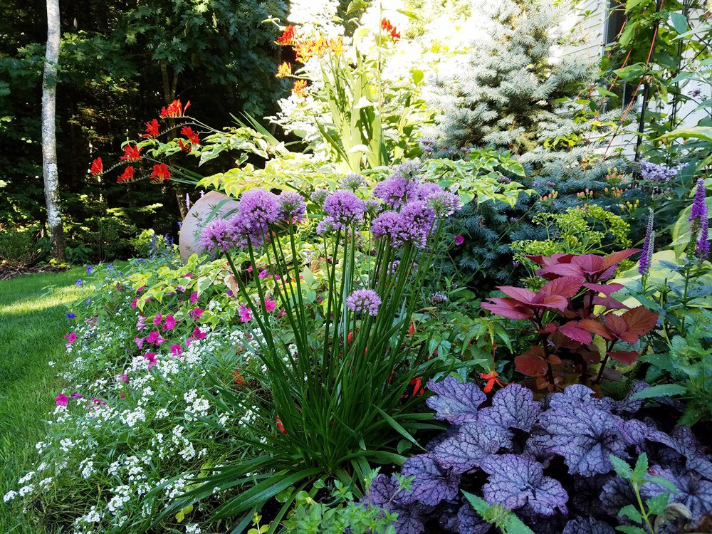 garden design mag on twitter learn about perennials from kerry ann mendez during her webinar 1027 including what to plant for pollinators
