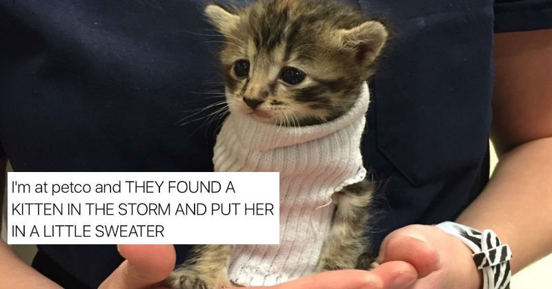 Kitten Found During Hurricane Matthew Becomes Twitter Famous Thanks to a Tube Sock https://t.co/Wra7aUZGTe https://t.co/No1q8hF0ZX