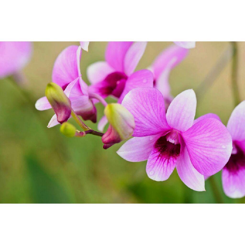 Wholesale Flowers WholeBlossoms