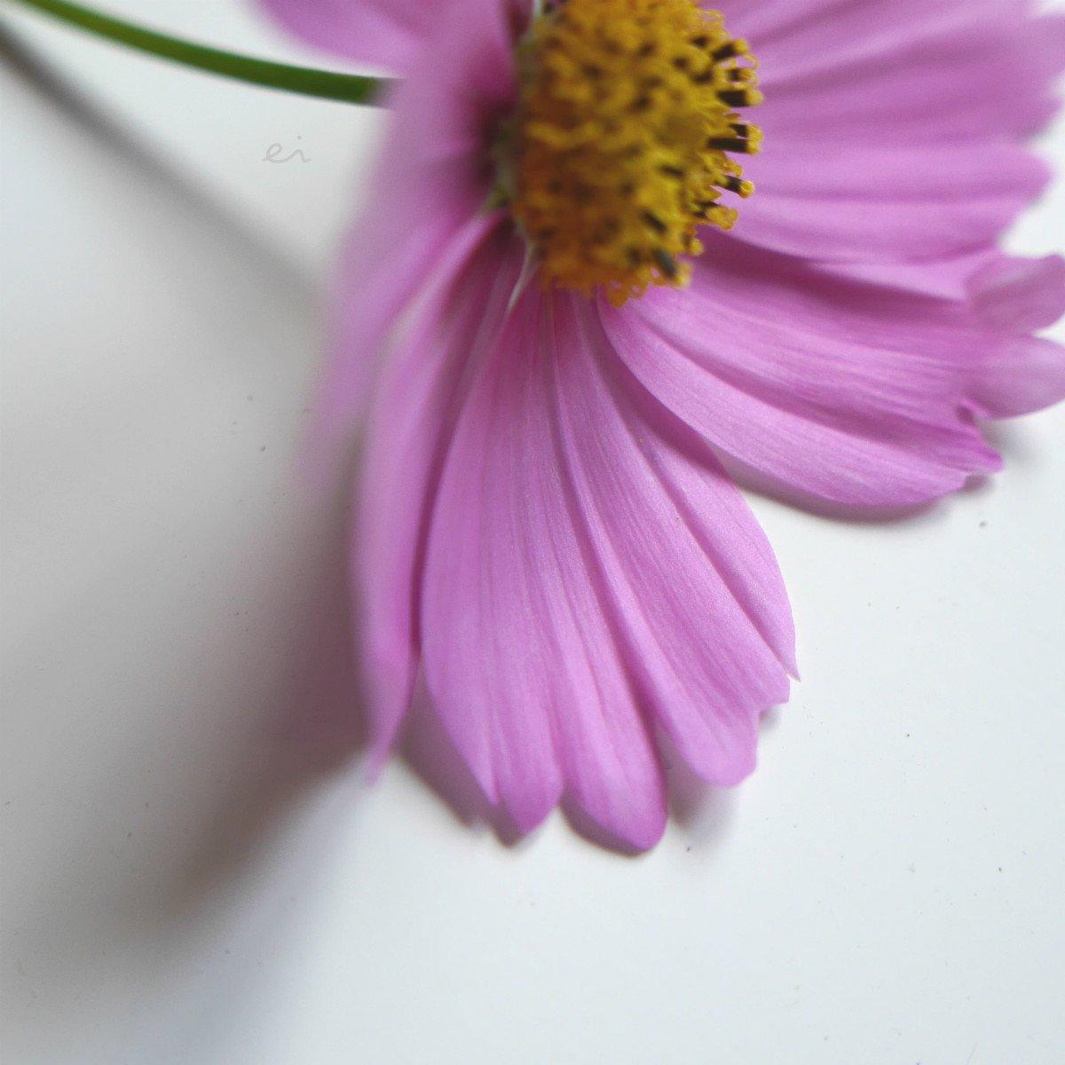 09:39 #photography #flowers #art  #cameralife #lumixG6 #japan #sapporo  IG→ https://t.co/foTcNME73T https://t.co/BJsh2sq8DZ