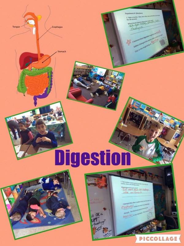 Digestion begins in mouth w/saliva & chewing! Then moves to esophagus! @Ivysherman #seamanstrength https://t.co/slBAi2TaCX