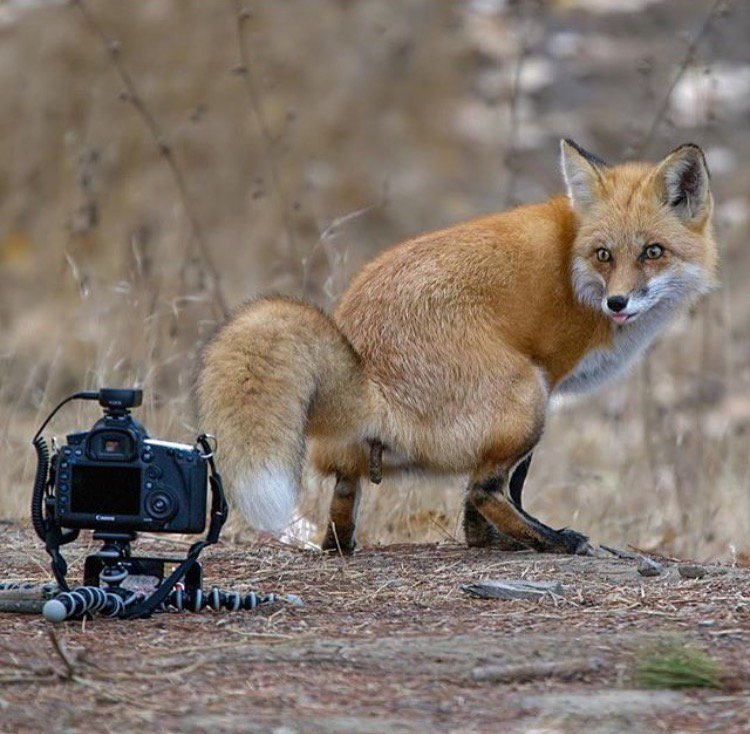 is this the greatest wildlife photo ever?