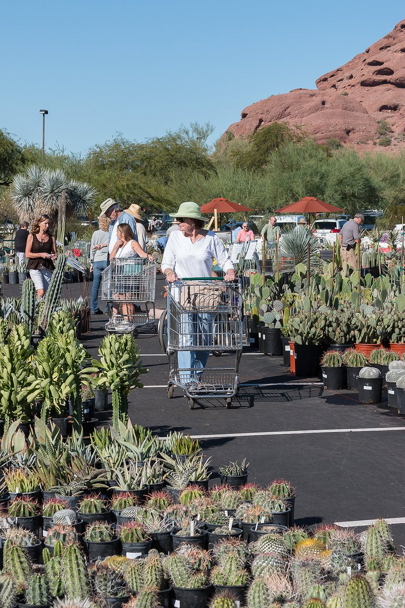 Desert Botanical Garden On Twitter Tomorrow Morning Bright And Early The Fall Plant Sale Begins Open From 7 Am 5 Pm Sat 7 Am 3 Pm Sun Https T Co Jxqiysgbc8 Https T Co Xx78npuogf