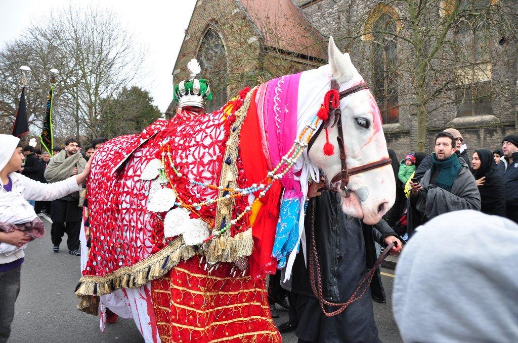 zuljinah horse