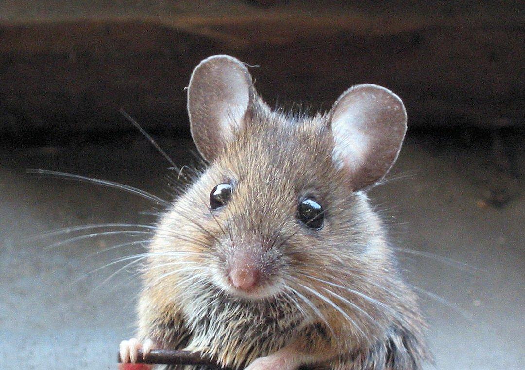 東亜大学の獣医看護学コースは、山口大学との教育研究交流に関する協定を踏まえ、獣医師と共に動物の治療及び施設運営に関わる #動物看護師 を養成しています。  pic.twitter.com/anCKlLk5fi