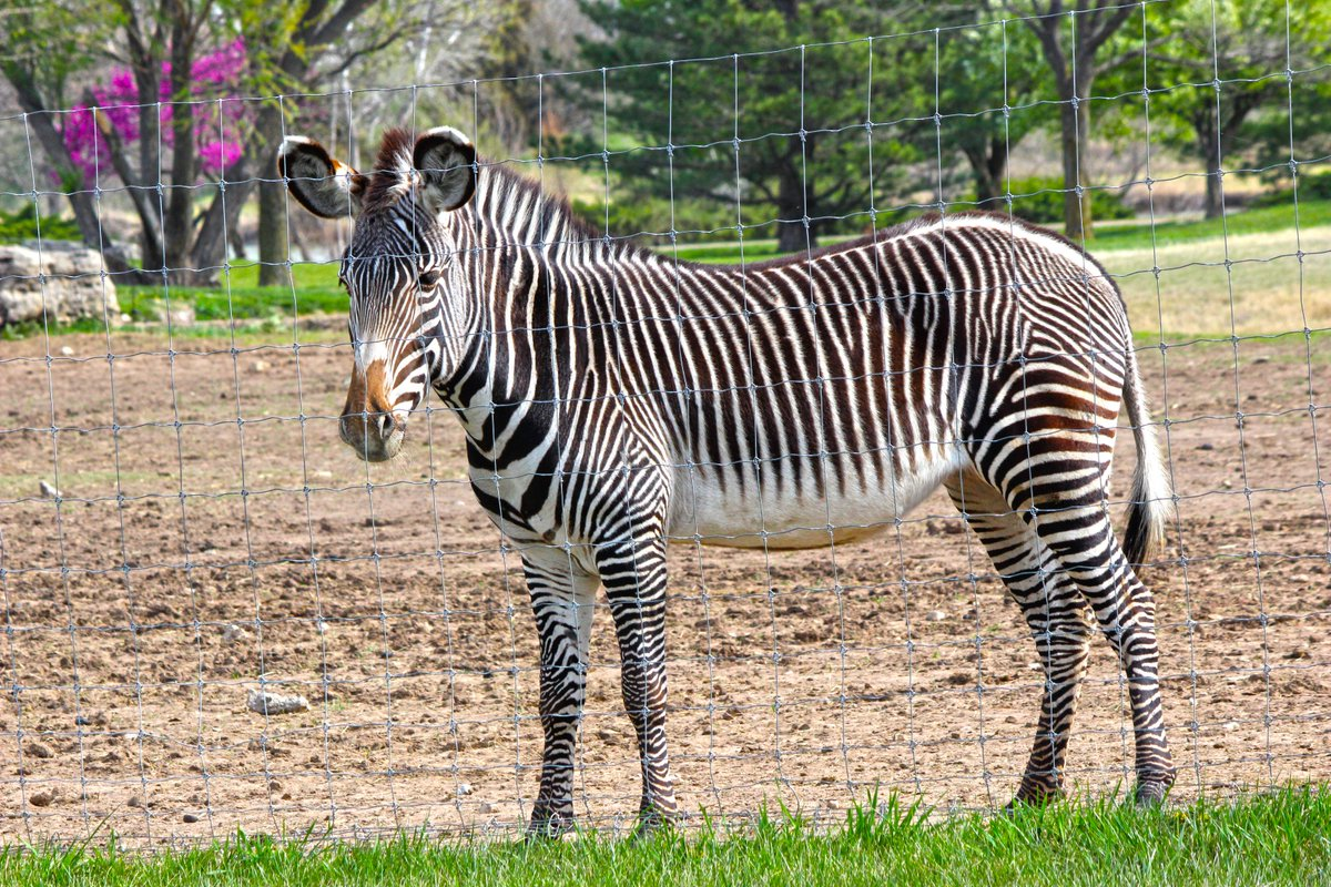 Tanganyika Wildlife Park Twitter वर:
