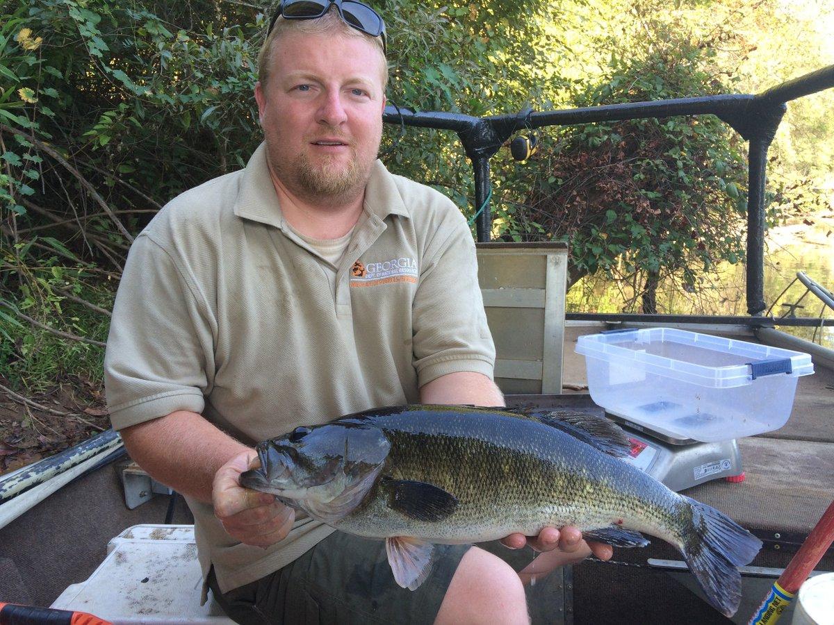 Georgia dnr wildlife on twitter shellcrackers for Ga dnr fishing