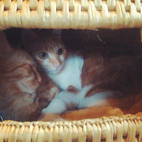 外気温が下がると、ちぐらの中はあたたかくなるようです。猫の平熱は38~39℃。猫のぬくもりが人にもうれしい季節ですね。#鎌倉ねこの間 #鎌倉猫カフェ  #鎌倉 #猫カフェ ...