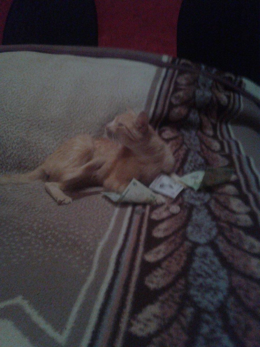 pisica face bani