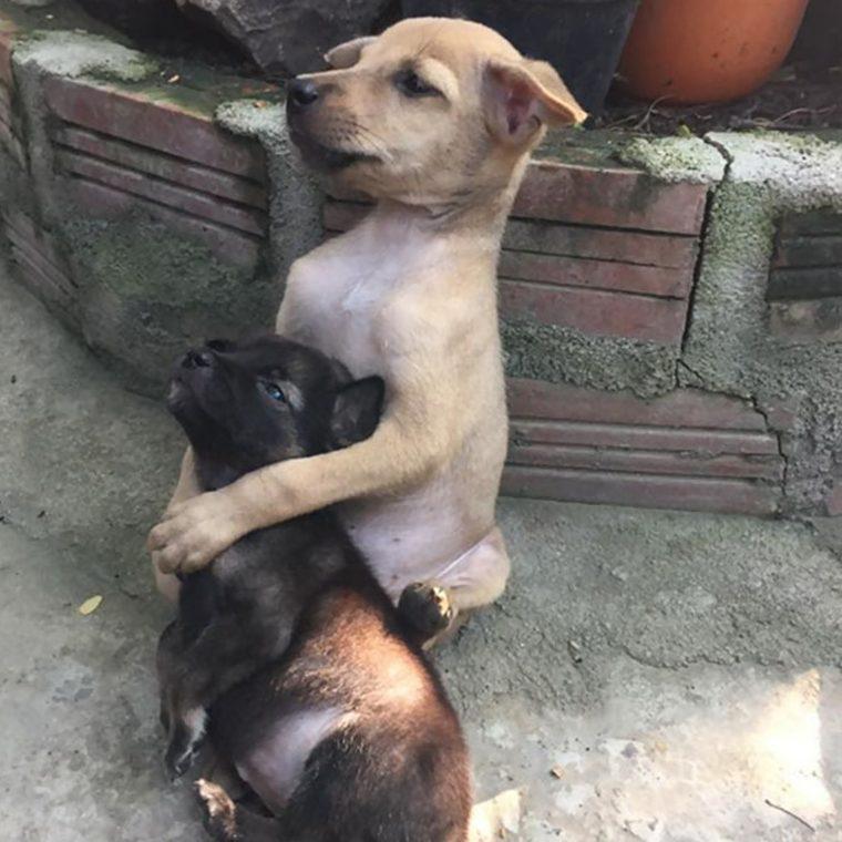 cachorrinhos que ficam abraçados após serem resgatados esta passando na sua timeline