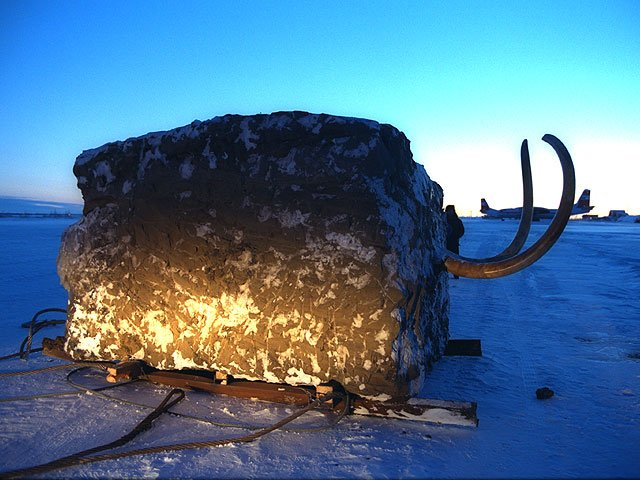 "The Ice Age ❄️🌞 on Twitter: ""In 1999 the Jarkov Mammoth was airlifted from  the Taymyr Peninsula within a 23-tonne block of frozen Siberian mud for  storage in an ice cave… https://t.co/z59GwxbXl4"""