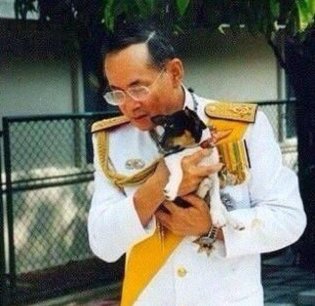 สำหรับพวกเราคนรักสุนัขทั้งหลาย คงไม่ต้องมีคำบรรยายสำหรับภาพนี้ (ขออภัยที่ไม่ทราบที่มาของภาพ) https://t.co/PiBvra0abc