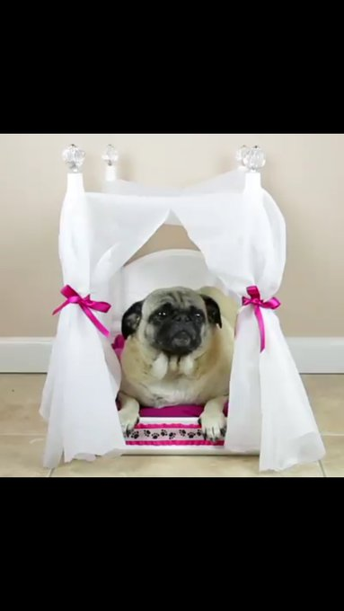 WeLoveDogsUSA: Hilarious, but also super cute! diydog diy dogbed cra
