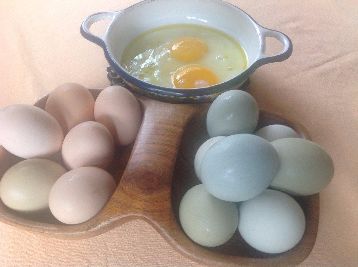 Un uovo al giorno, raccomandano gli specialisti
