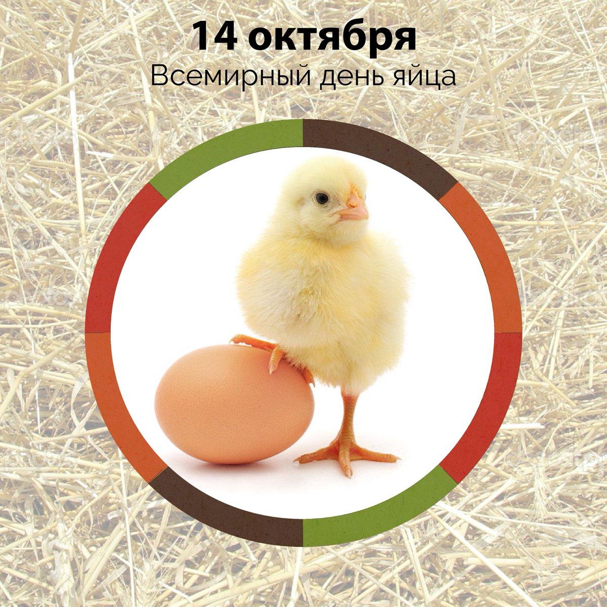 Открыток день, всемирный день яйца гифы