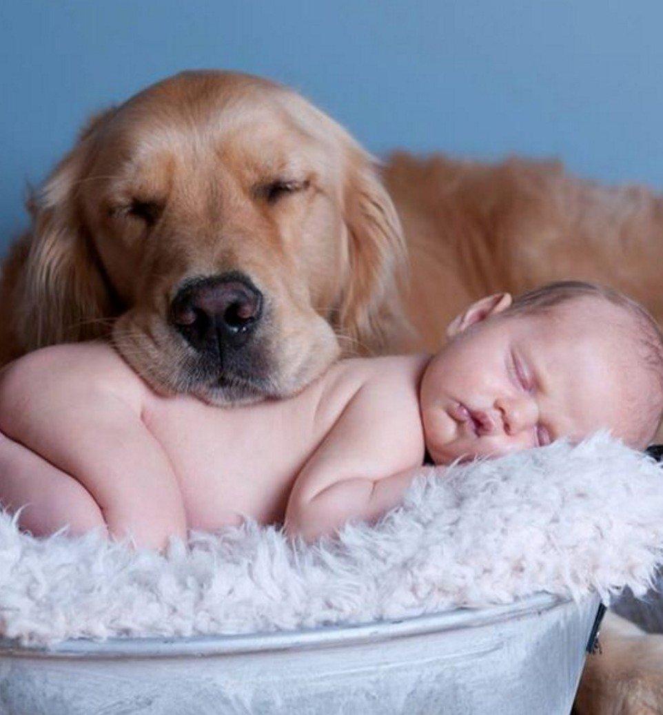 Картинки по запросу baby and golden retriever